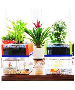 Aquaponic Fish Tank - Blue